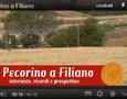 40ª Sagra del Pecorino di Filiano: film documentario